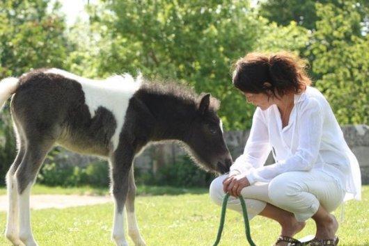 équitation saintes poney claire
