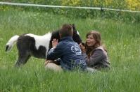 fregonniere poney saintes