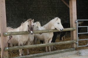 poney saintes