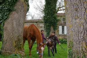 équitation a saintes